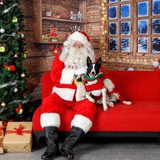 11 hhs santa by @lauraphotospets