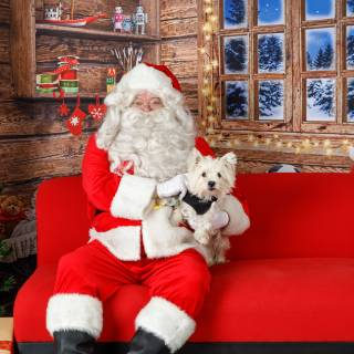 13 hhs santa by @lauraphotospets