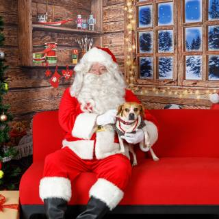 14 hhs santa by @lauraphotospets