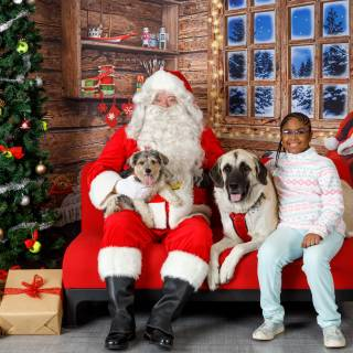 15 hhs santa by @lauraphotospets