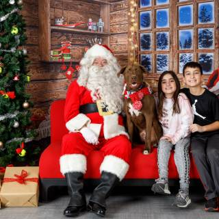 16 hhs santa by @lauraphotospets