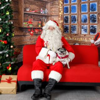 18 hhs santa by @lauraphotospets