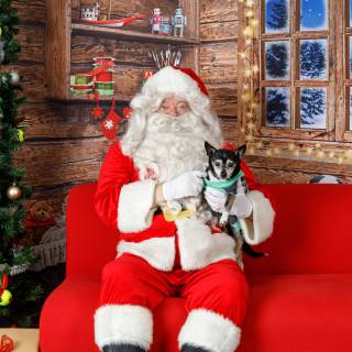 21 hhs santa by @lauraphotospets