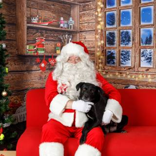 23 hhs santa by @lauraphotospets