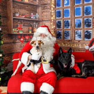 24 hhs santa by @lauraphotospets