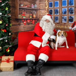26 hhs santa by @lauraphotospets