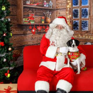 27 hhs santa by @lauraphotospets