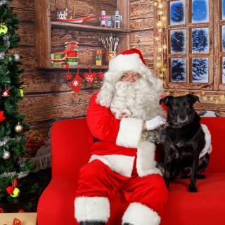 30 hhs santa by @lauraphotospets