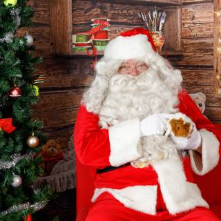 32 hhs santa by @lauraphotospets 1