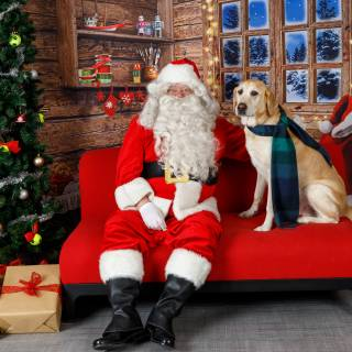 33 hhs santa by @lauraphotospets