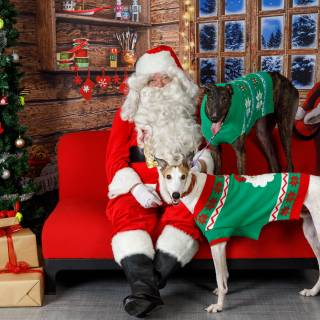 38 hhs santa by @lauraphotospets