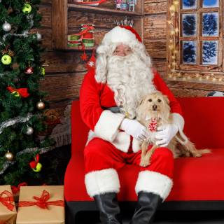 3 hhs santa by @lauraphotospets