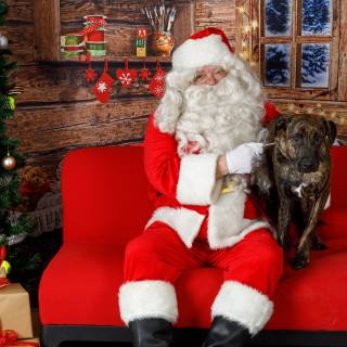 40 hhs santa by @lauraphotospets