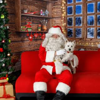 41 hhs santa by @lauraphotospets