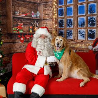 43 hhs santa by @lauraphotospets -2