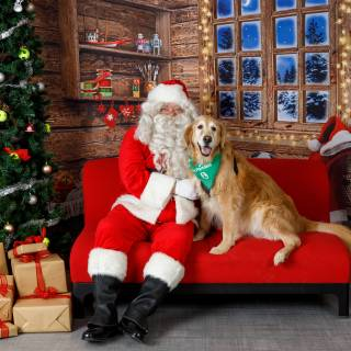 43 hhs santa by @lauraphotospets