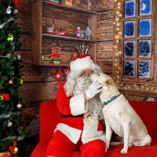 46 hhs santa by @lauraphotospets