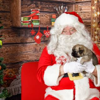 48 hhs santa by @lauraphotospets