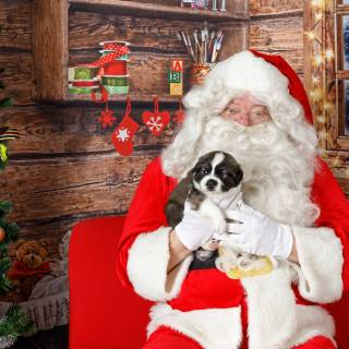 49 hhs santa by @lauraphotospets