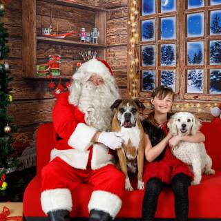 5 hhs santa by @lauraphotospets