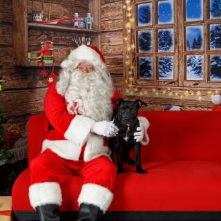 8 hhs santa by @lauraphotospets