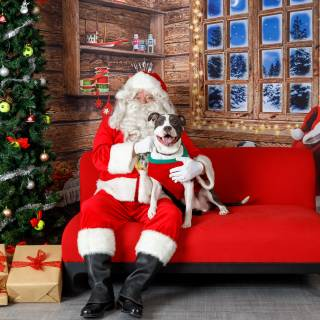 9 hhs santa by @lauraphotospets