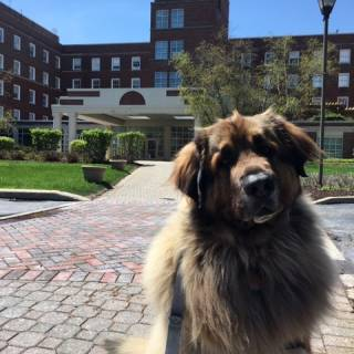 29. klaus in front of hinsdale hospital