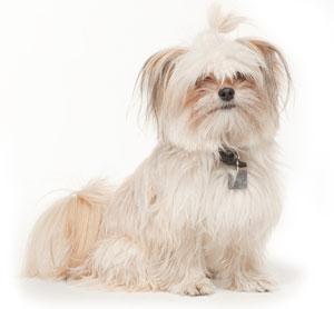 Zoe's Dog Blog