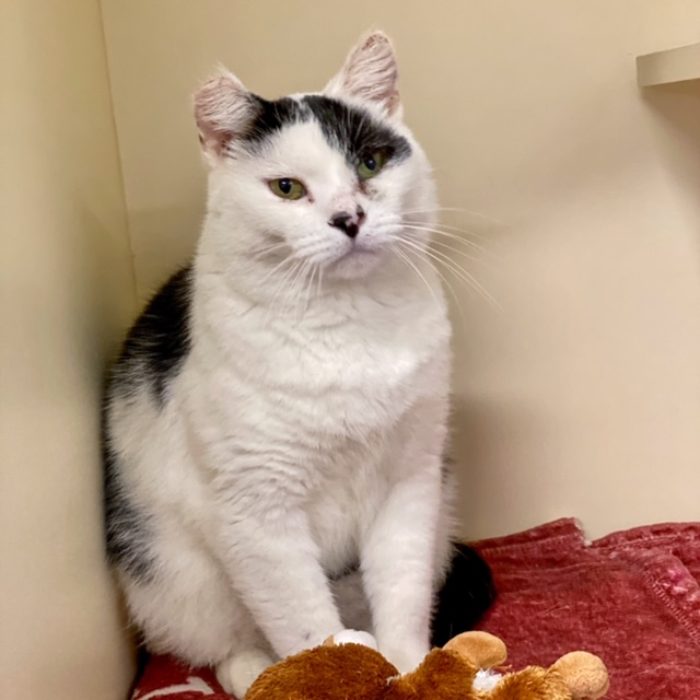Star (bonded with Patches)