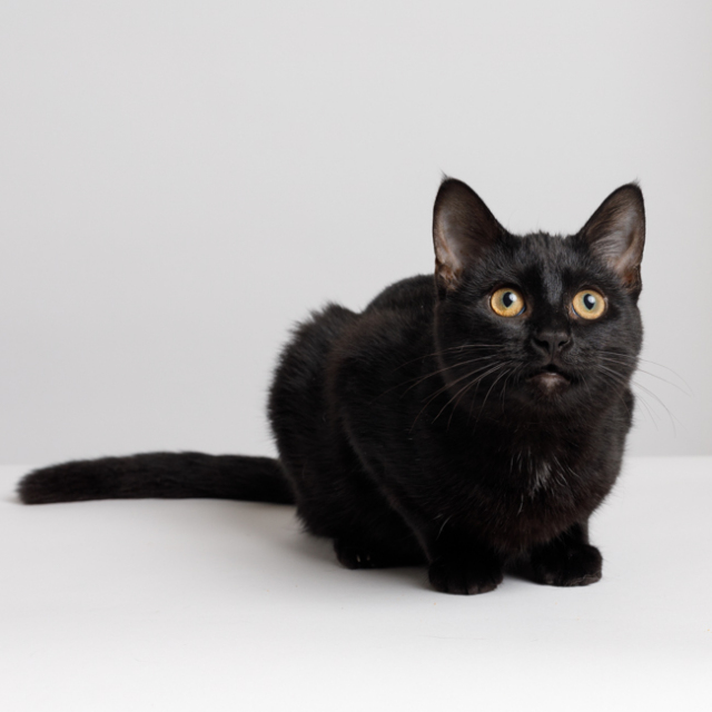 Porsche (bonded with Snookers)