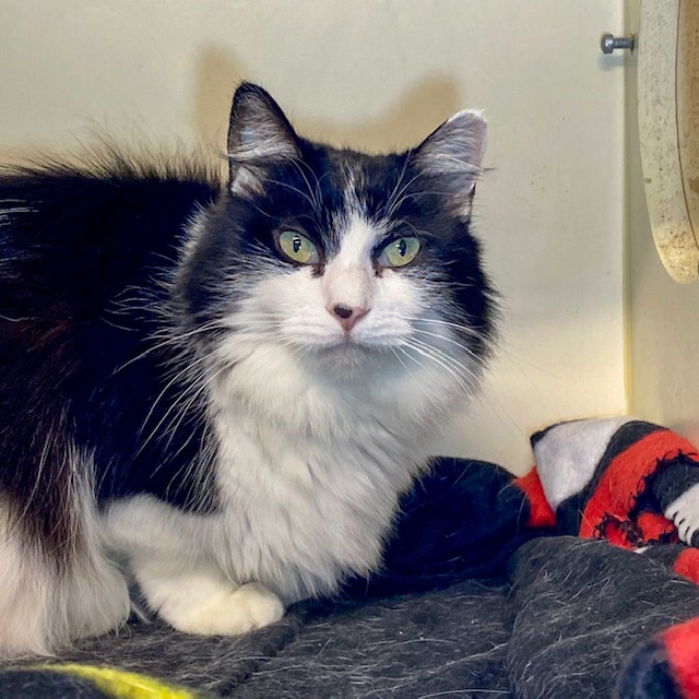 Patches (bonded with Star)