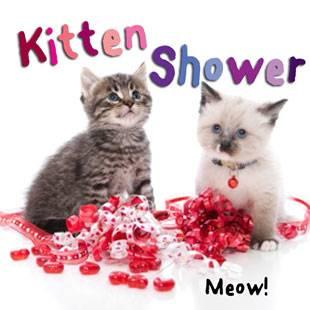 Kittenshowerx310
