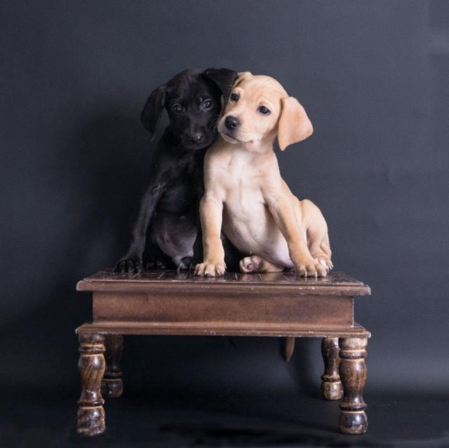 306-309 2 pups a