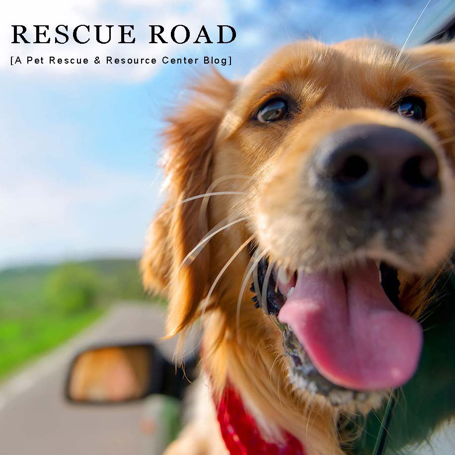Rescueroadimage