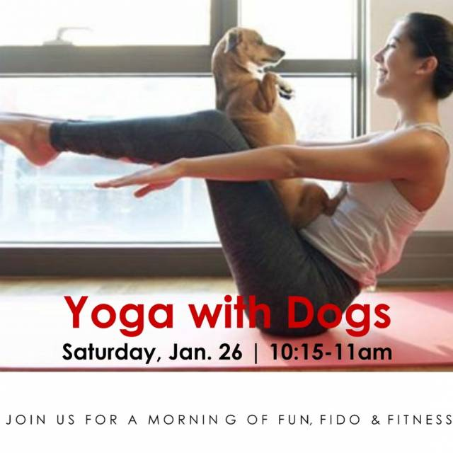 Yoga with dogssq