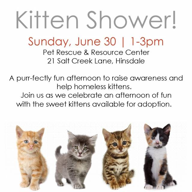 Kitten-shower2019-2