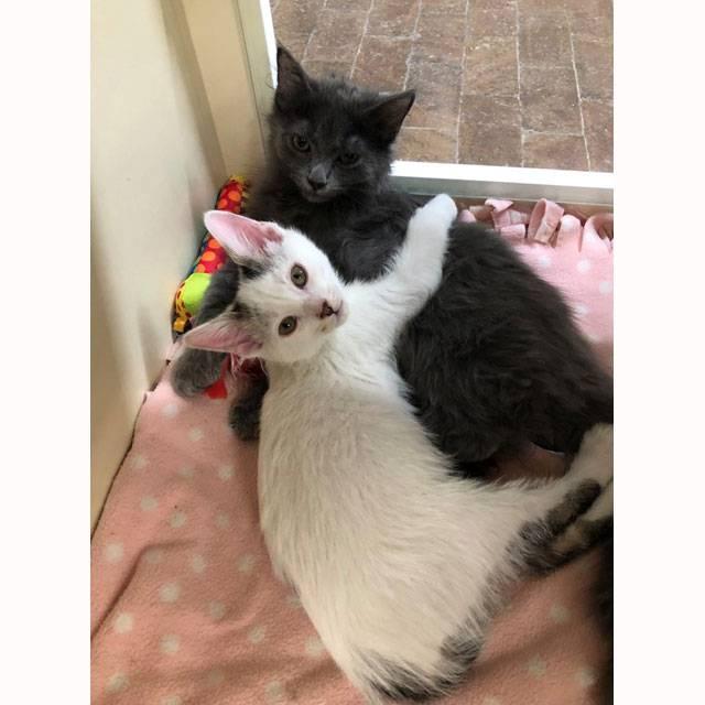 Kitten-shower