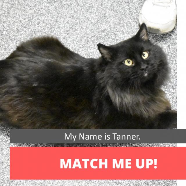 Match tanner