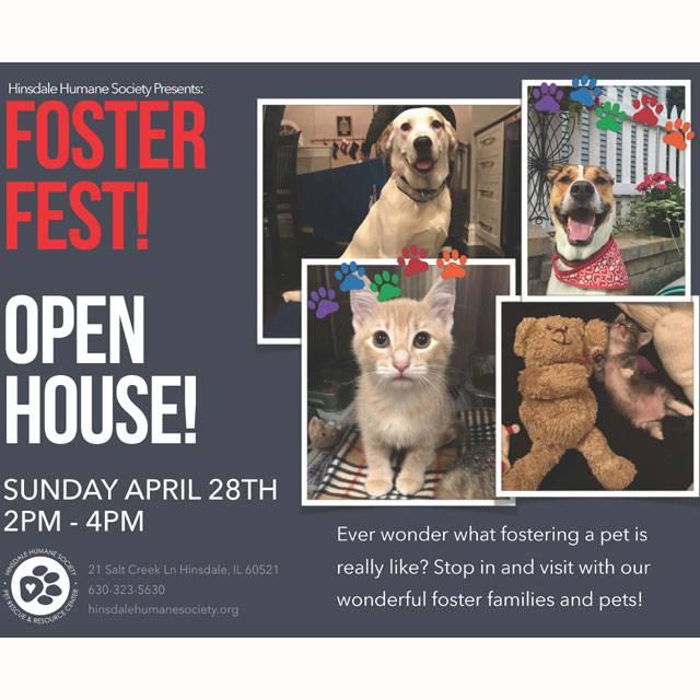 Fosterfest2