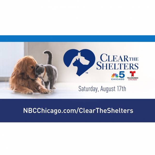 Clear the shelters2019