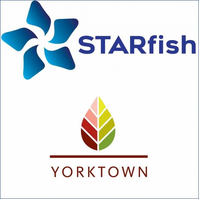 Yorktown-starfish