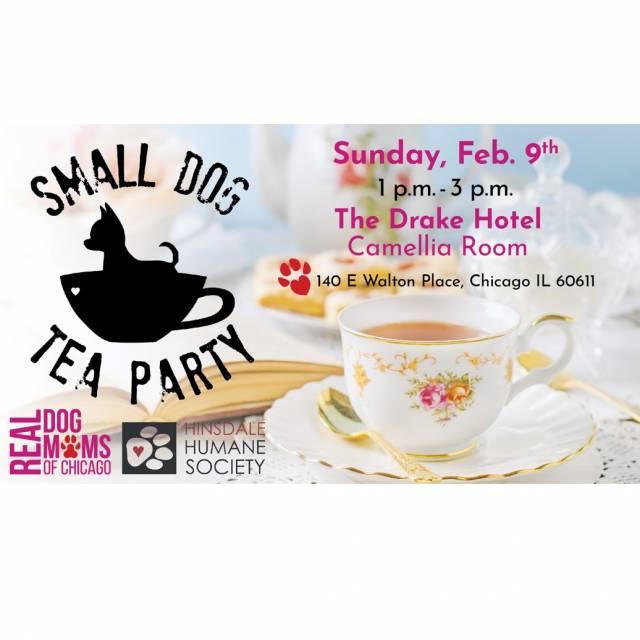 Sm dog tea party