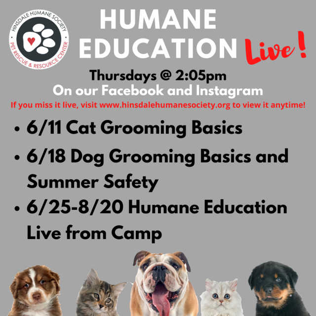 Humane education live continued