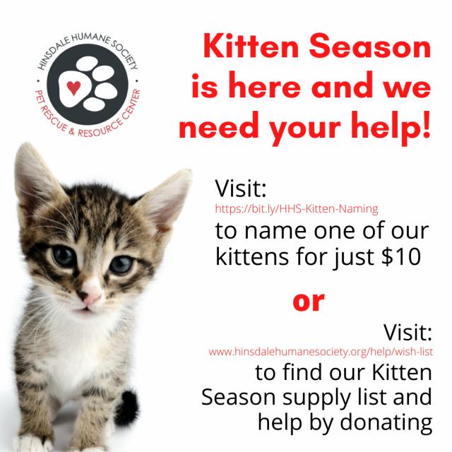 Kitten season graphic