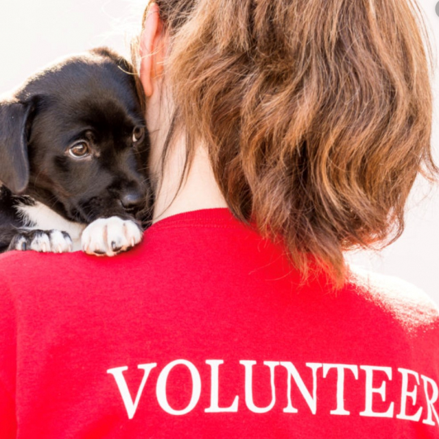 Volunteer-with-puppy