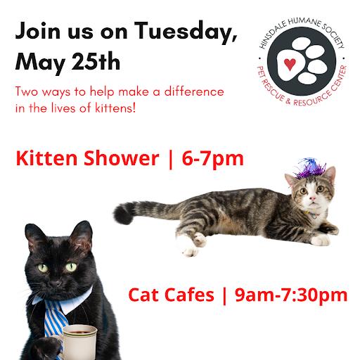 Kitten-shower2021