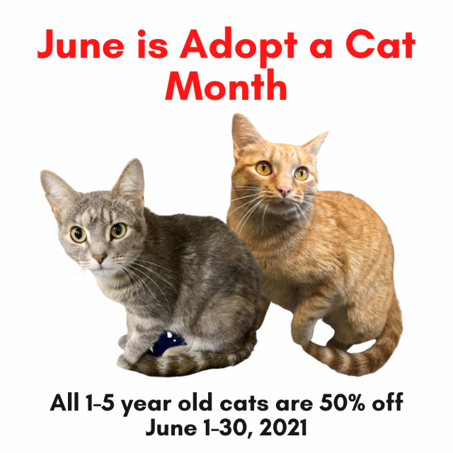 Adopt a cat month square