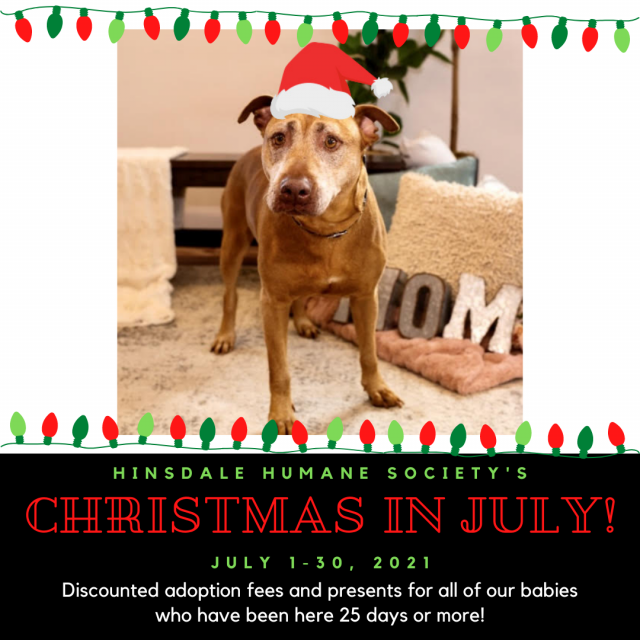 Christmas in july features and news