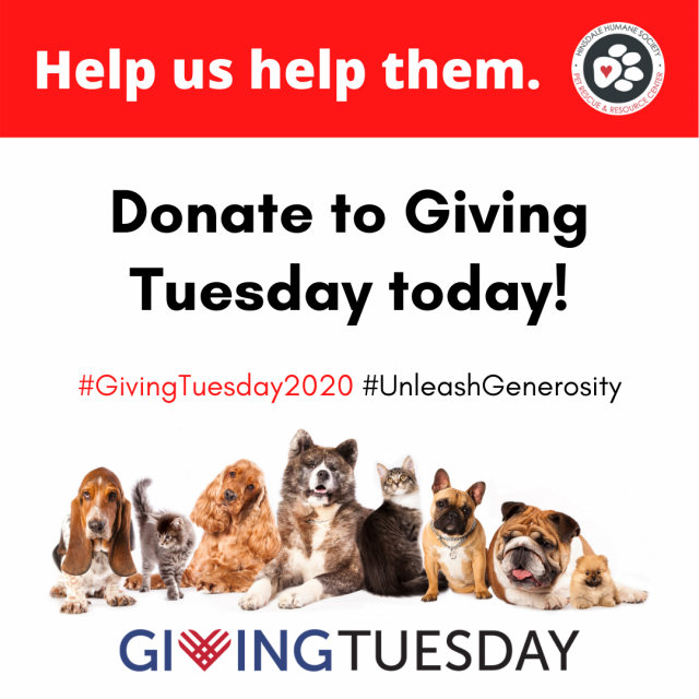 Giving tuesday features and news (1)