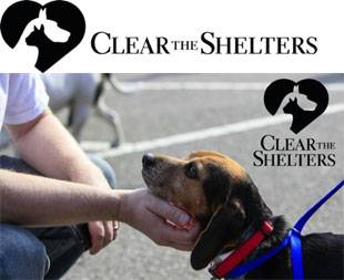 Clear-shelters310